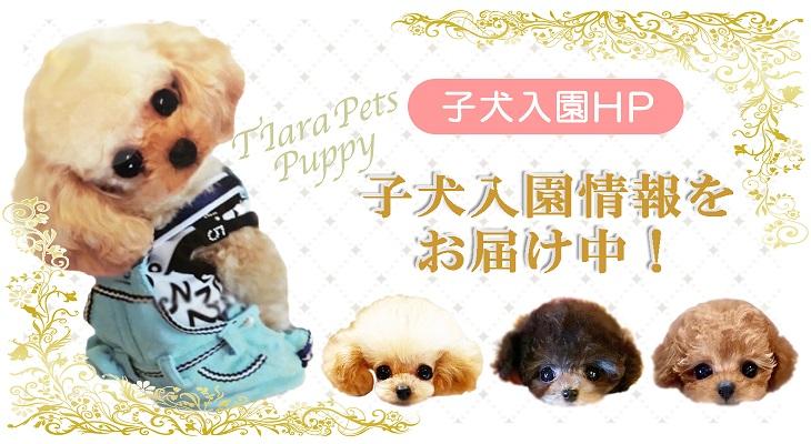 子犬&子猫入園ブログ